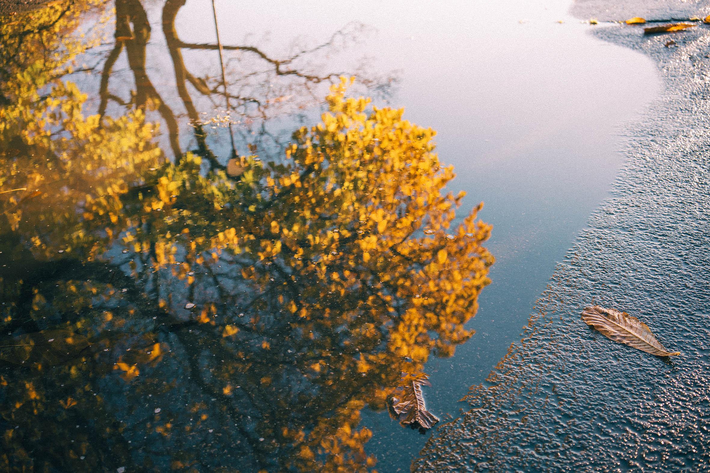 Speilbilde av et vakkert gult og Orange tre en sen oktober dag, Vålerenga kirke, inspirasjon til bryllup