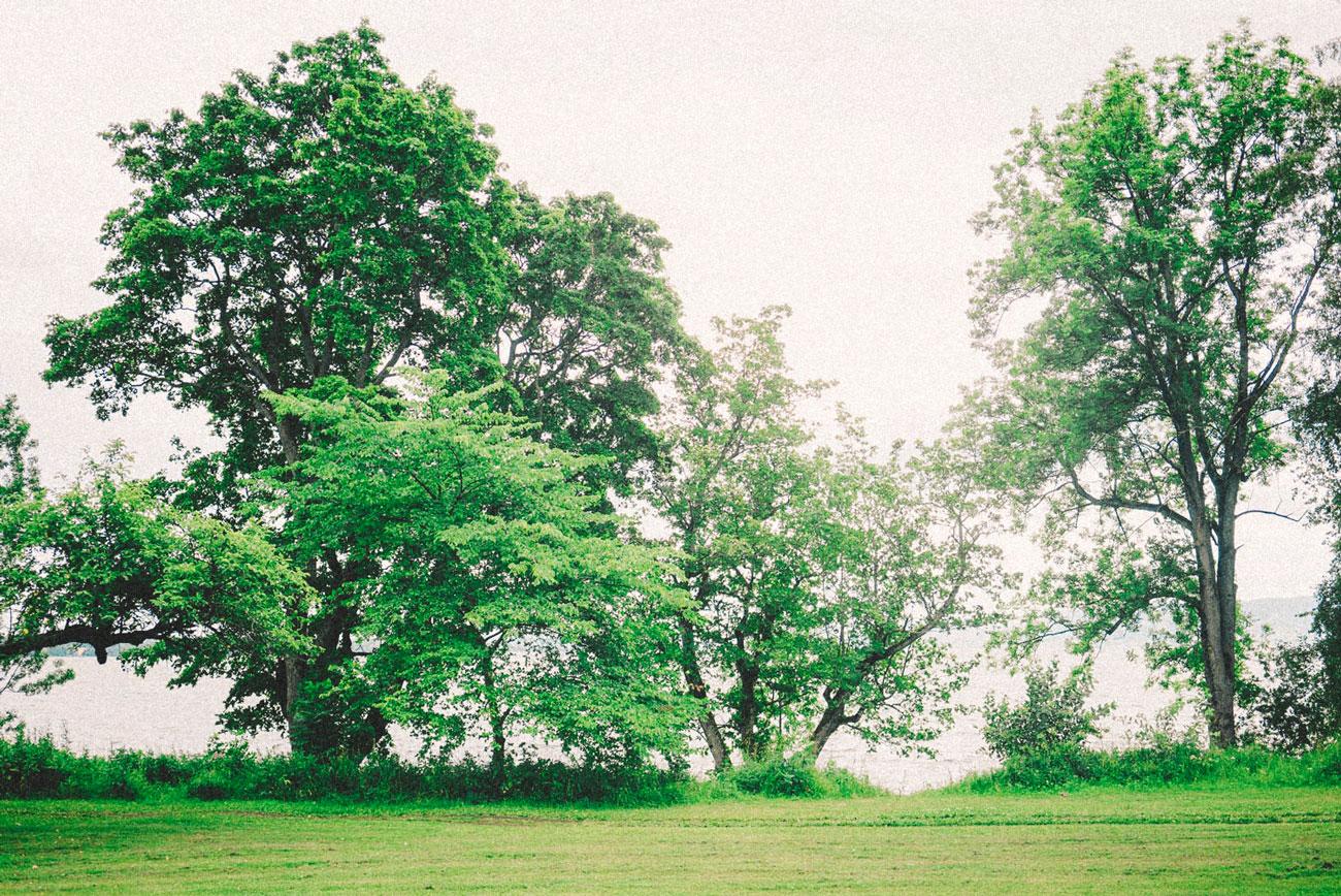grønn natur