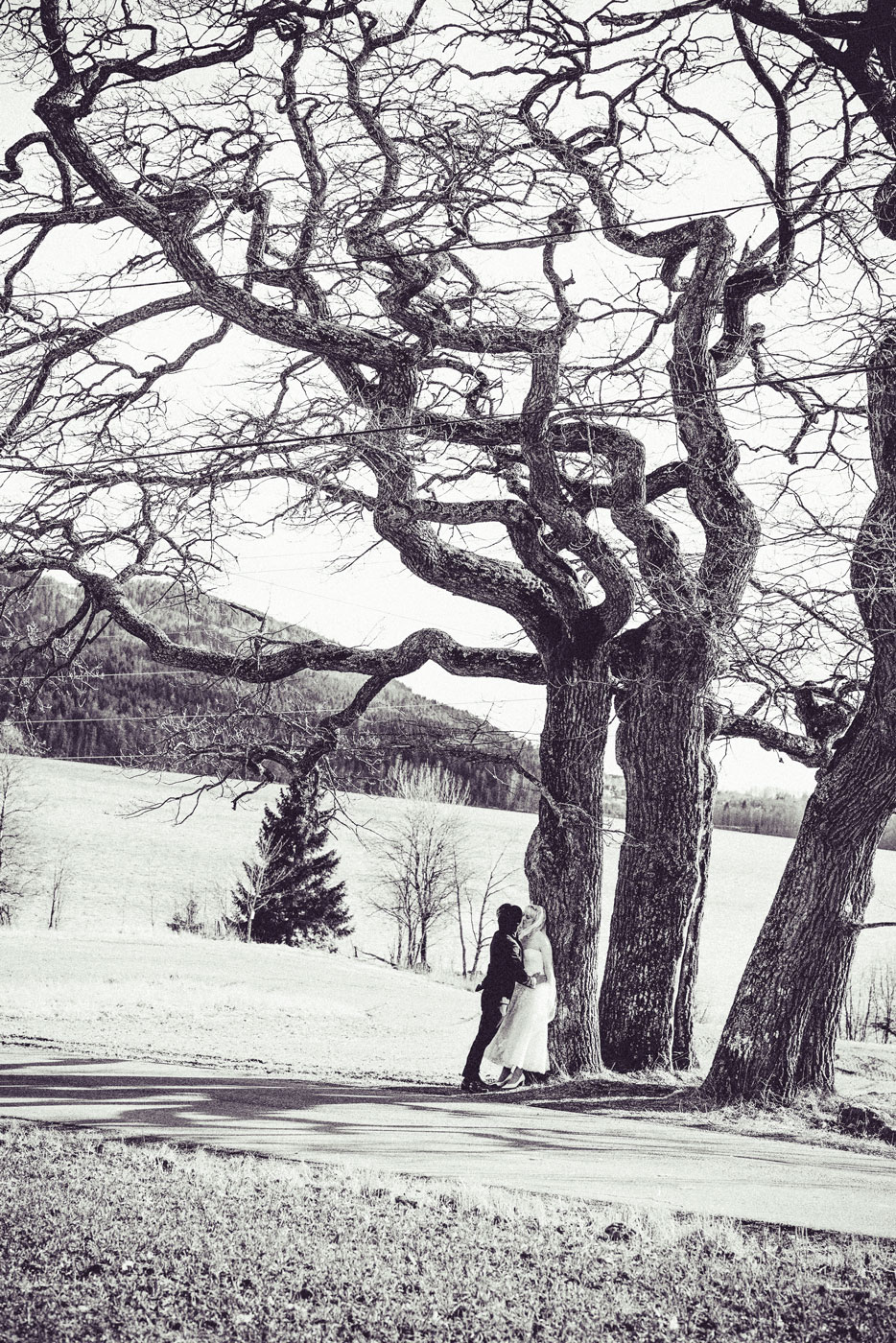 bilde av nygift par under et tre fra en fotograf bryllup