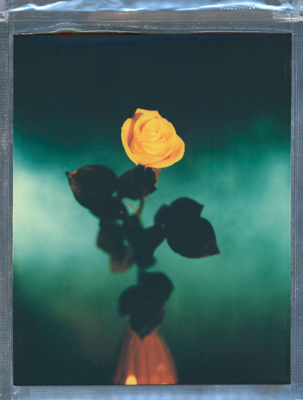 grønt og gult bilde av en rose fra en tørket brudebukett