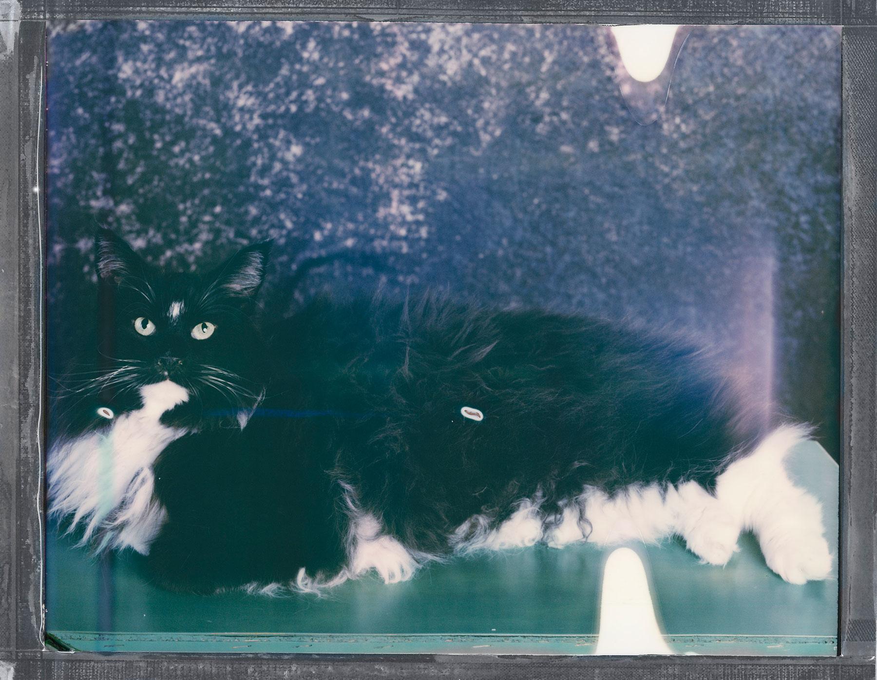 bilde av en katt tatt av portrettfotograf Oslo